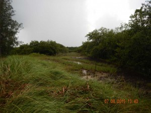 New-Smyrna-Beach-Trail-Mitigation-Area-2015-a