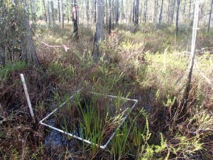 Wetlands-Monitoring-Plot-1