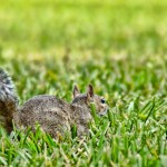 squirrel-499194_640